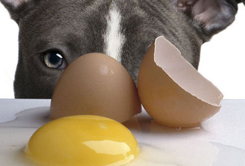 dogs should not eat raw eggs