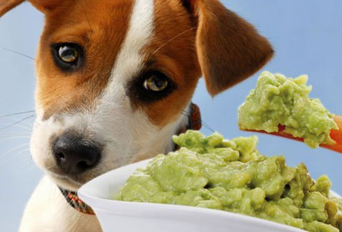 dogs should avoid avocados or guacamole