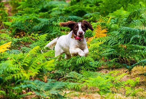 Dogs who love to run in the brush can bring home an infected tick and pass it to you.