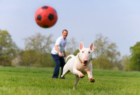 Dog chasing soccer ball