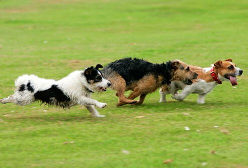Dogs running in the park