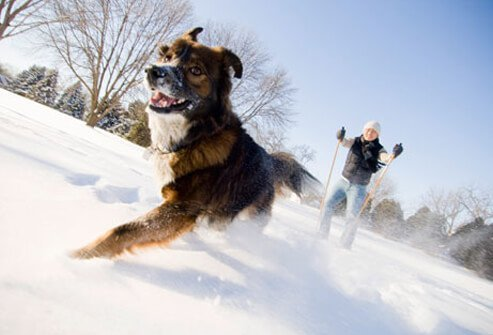 Dog running in the snow while owner skis