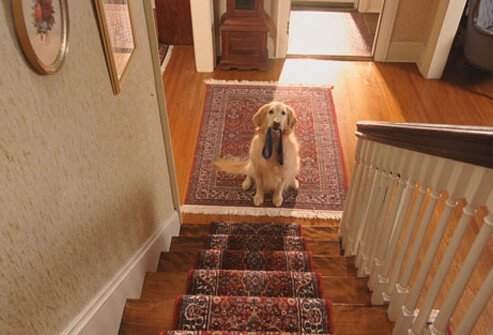 Dog waiting at the bottom of the stairs with leash in its mouth