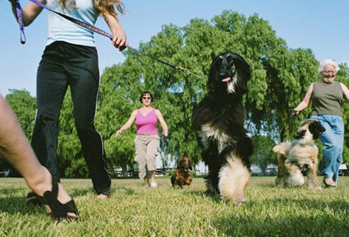 Dogs and their owners at a dog park