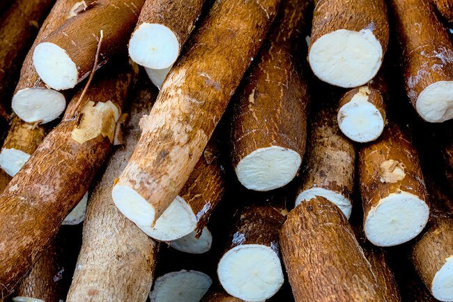 Cassava is good for soups, stews, and in breading for pan-fried dishes.