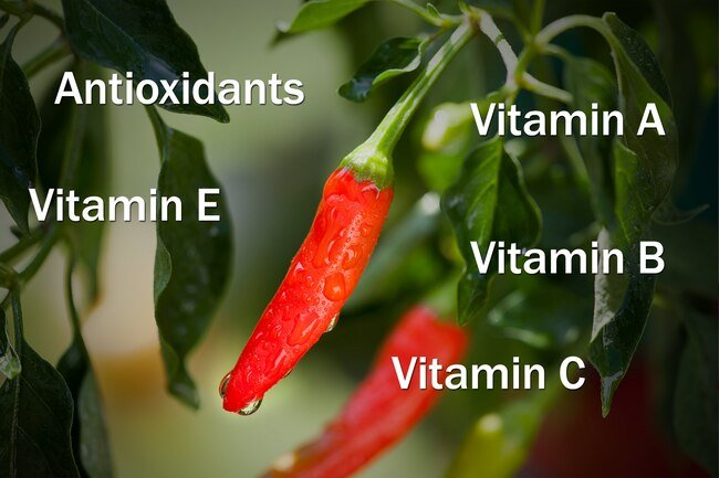 Hot peppers are high in many vitamins and antioxidants.