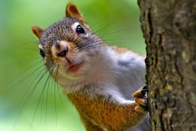 Squirrels and chipmunks may harbor fleas and ticks.