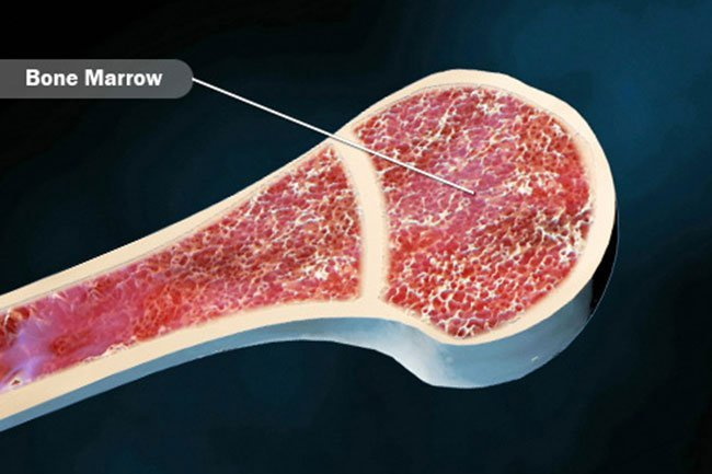 Bone marrow is where most blood cells come from.