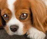Healthy Pets Picture Slideshows on Dug & Cat