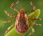 Rocky Mountain Spotted Fever: Causes, Symptoms and Treatment