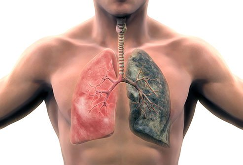 The only thing known to prevent COPD is to stop smoking.