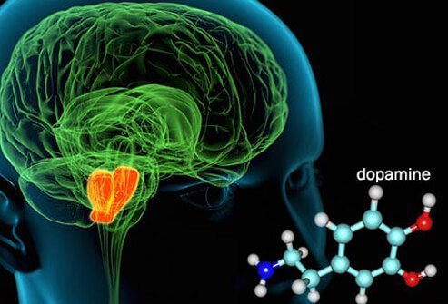 How quickly cannabis affects on the brain depends on how it is consumed (smoked or eaten).