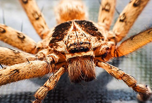 Spiders eat other insects and they often hang out in windows, corners, and quiet areas.