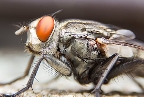 Flies may carry disease and cause food poisoning.