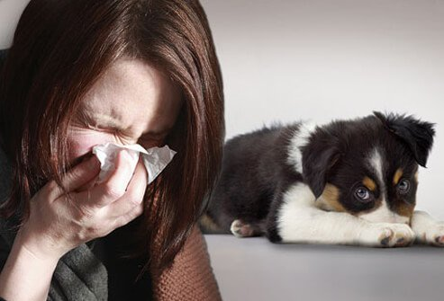 A sneezing woman and dog.