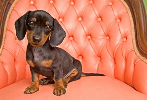 A dog on a pink chair.