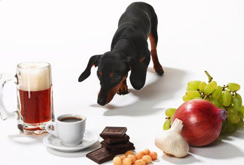 Photo of daschund and toxic foods.