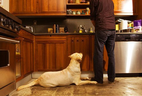 Photo of dog watching while man cooks.