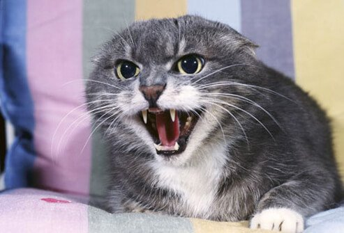 Notify the vet immediately if your cat becomes aggressive.