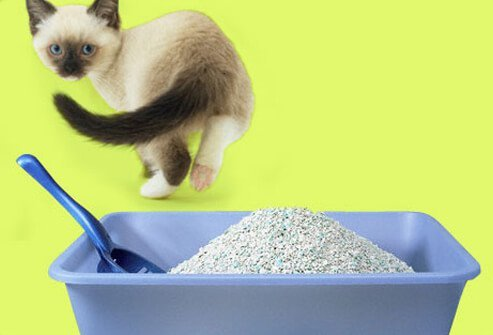 Cat avoids the litter box.