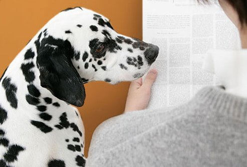 Man reading newspaper with dalmation