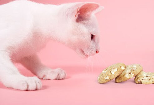 Cat sniffing macadamia nut cookie