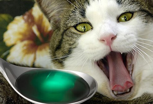 Spoonful of medicine in front of yawning cat