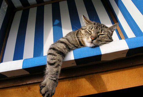 It may seem lazy, but sleeping or lounging around the whole day is a survival trait if you're a cat.