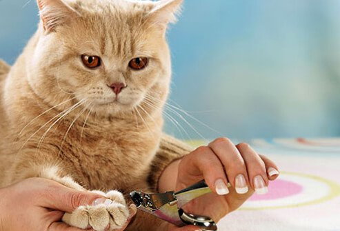 Nail clippers for cats