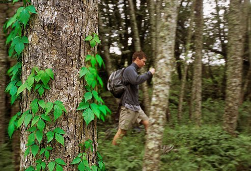 Poison ivy, poison oak, and poison sumac grow in wooded or marshy areas throughout North America.