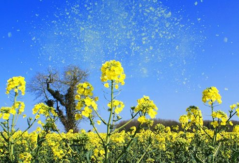 Allergies irritate airways and may trigger asthma.