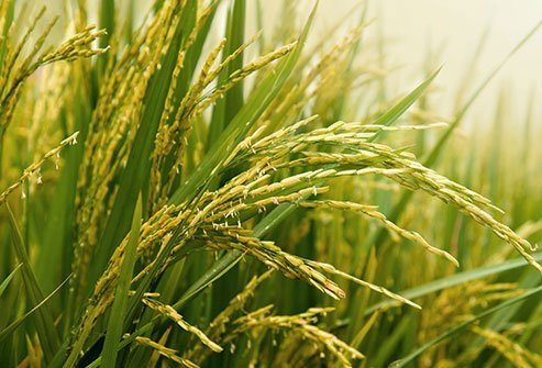 Also called Thai fragrant rice, its slightly flowery aroma is unmatched.