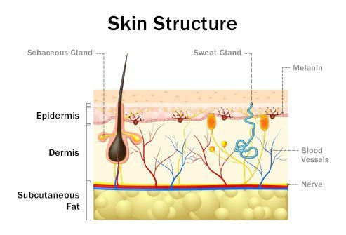 The many layers of skin provide different types of protection.