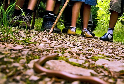 A venomous snakebite is hard on anyone, but because of their small size, children are especially vulnerable.