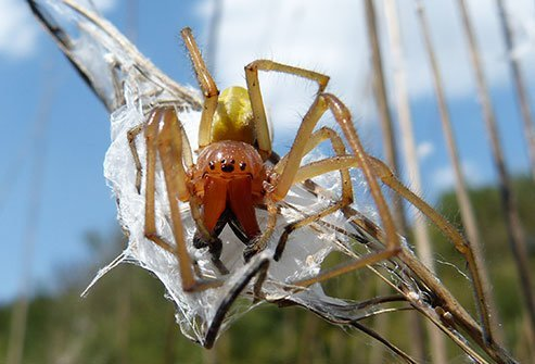 Nasty welts from spiders in the United States are most likely caused by the yellow sac spider.