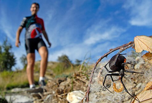 Hiker coming across black widow spider