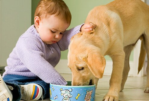 Baby Playing With Puppy.