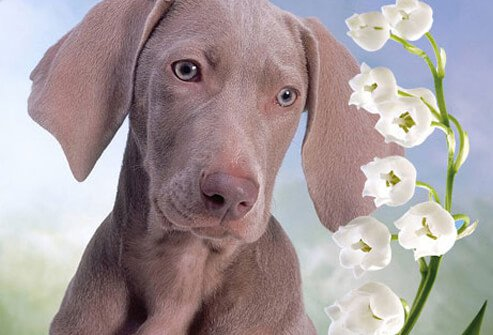 Puppy Looking at White Flowers.