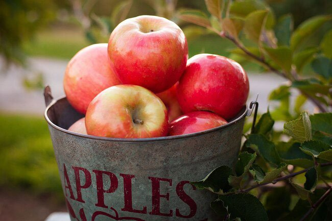 The old cliché exists for a reason: An apple a day benefits your whole body in multiple ways.