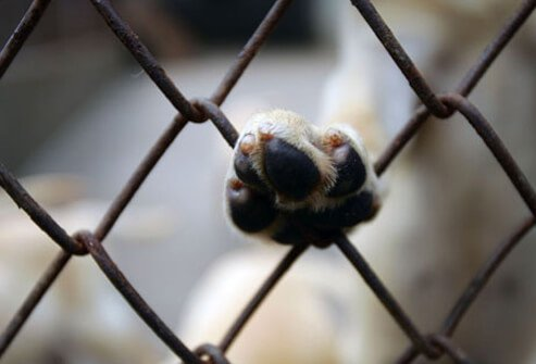 Dog paw resting on fence gate