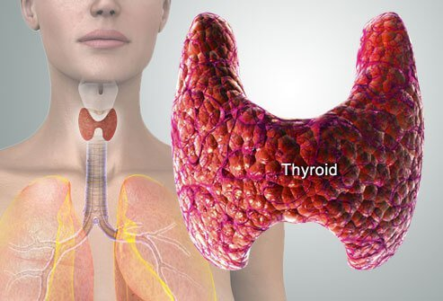 Thyroid diagram.