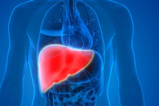 Before your body turns leftover glucose from carbs into fat, it stores what it can in your liver in the form of glycogen.