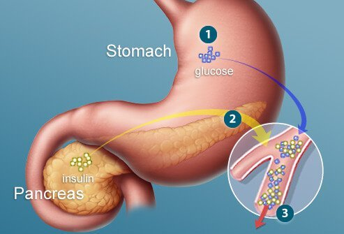 Illustration of stomach and pancreas.