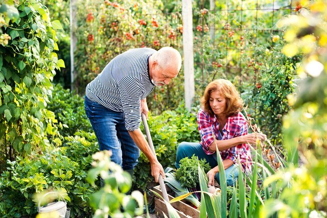Gardening helps you expend a decent amount of energy.